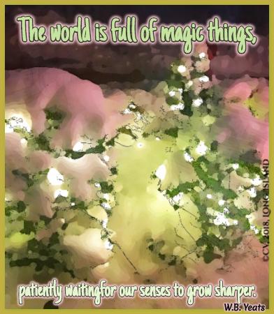 Magic_Things_Quote_by_Yeats.jpg